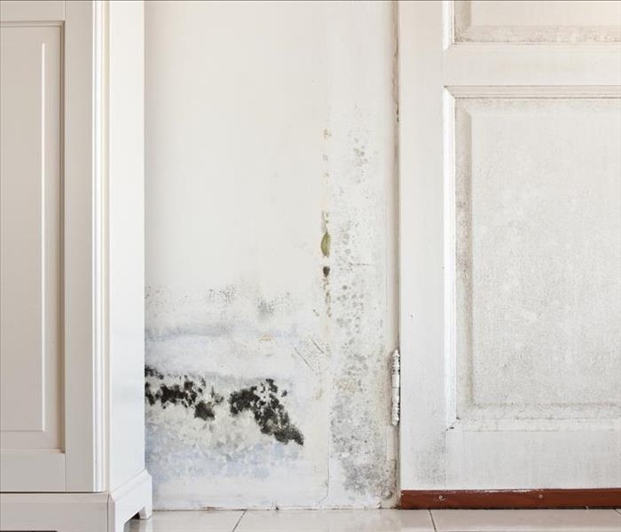 Mold Remediation What To Do And Avoid When Dealing With Mold Damage In Winnetka Homes