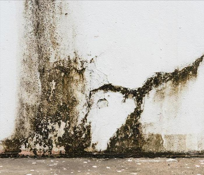 Mold Remediation Assessment and Planning Before Mold Remediation in Canoga Park