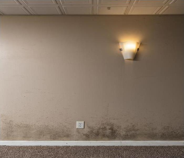 Mold Remediation We Are The Experts To Call When Your  Canoga Park Home Is Plagued By Mold