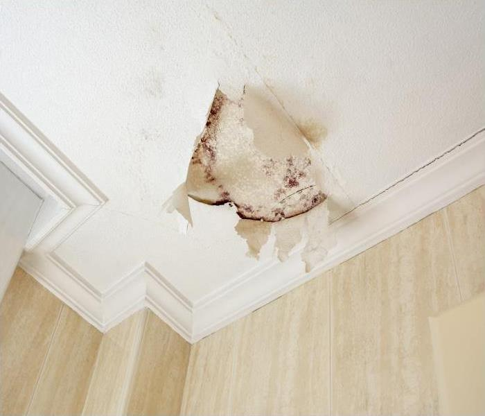 Mold Remediation Our Experts Explain Why It Is Better To Remove, Rather Than Kill, The Mold Infestation In Your Canoga Park Home