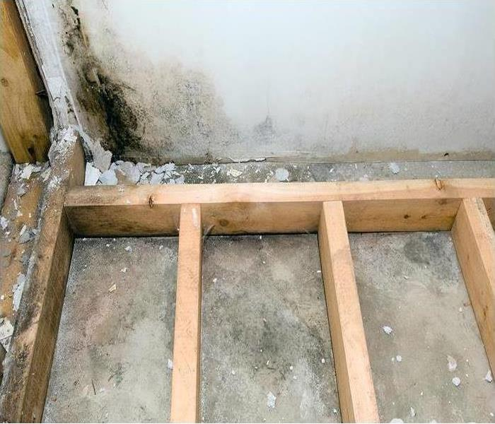 Why SERVPRO It's Tough Finding Mold Damage In West Hills
