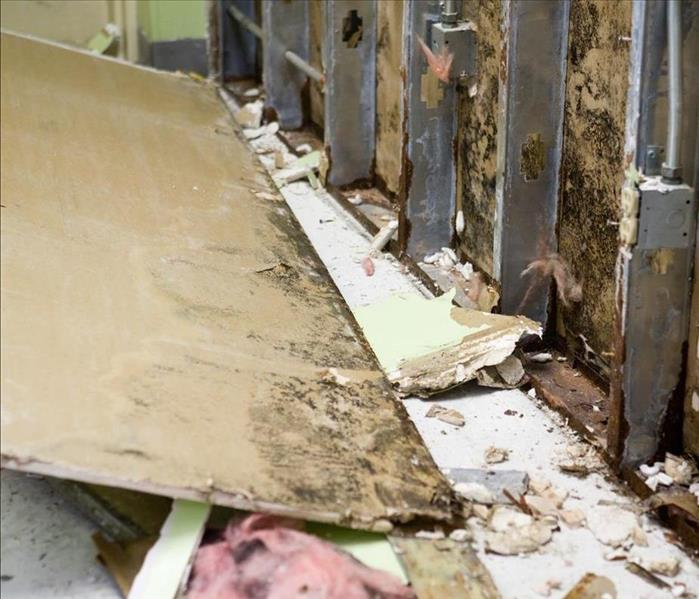 Mold Remediation Finding Mold Damage In Your Winnetka Home
